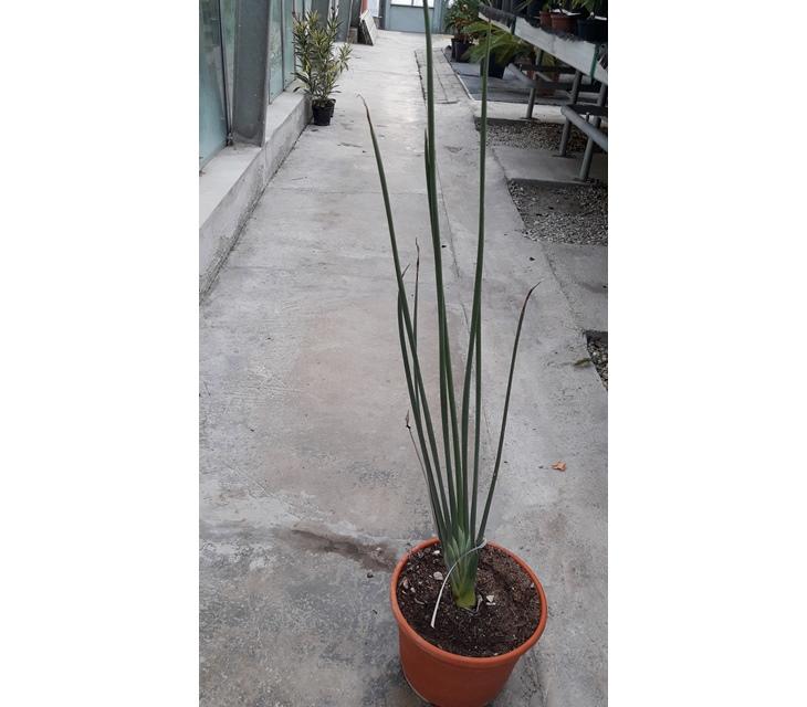 palmen kaufen holland