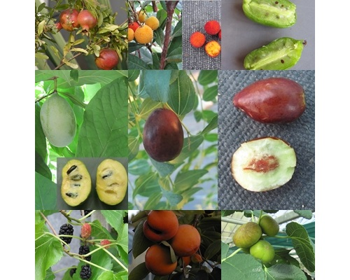 cold hardy fruit plants